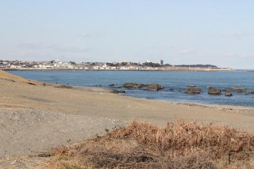 大洗海岸でバードウォッチング [2011](1)