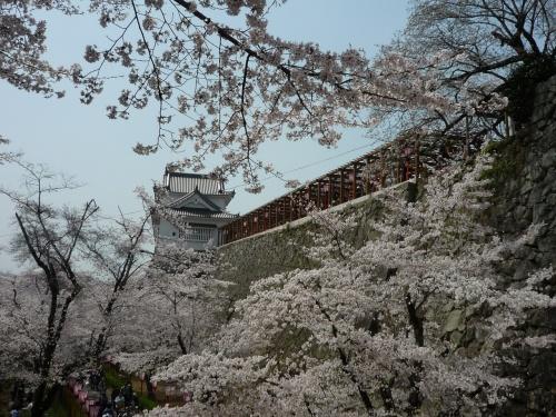 今年は2日連続でお花見! ~津山市・鶴山(かくざん)公園を訪ねて~