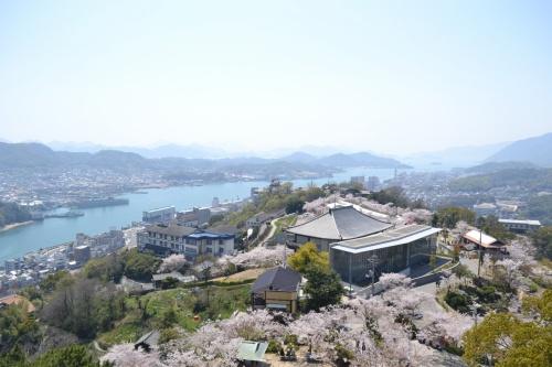 花咲く尾道…裏道、坂道、散歩道