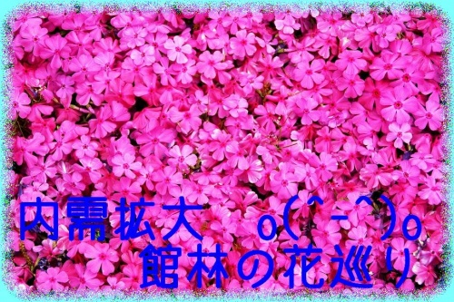 内需拡大o(^-^)o館林の花巡り