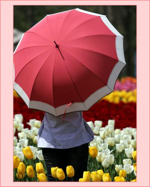 Solitary Journey [904] チューリップ満開~! \(^0^*)(*^o^)/ 丘一面の花景色♪♪ <世羅高原農場/チューリップ祭>広島県世羅町