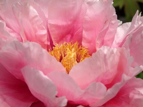 2011 川口グリーンセンター 下 咲く 花達
