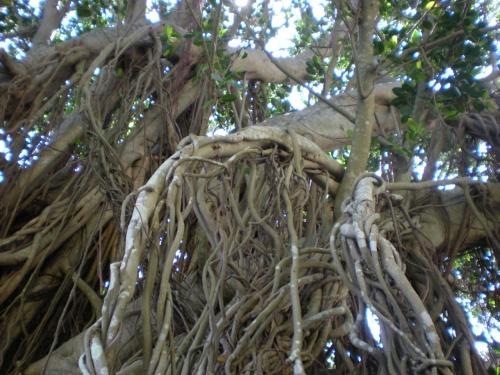 2010GW~鹿児島~