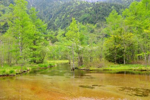 新緑眩しい上高地へ【1】~大正池から河童橋~