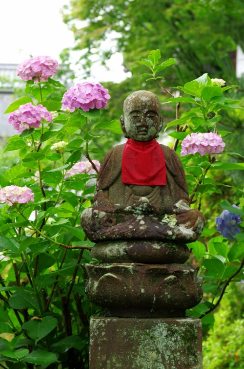 紫陽花の矢田寺