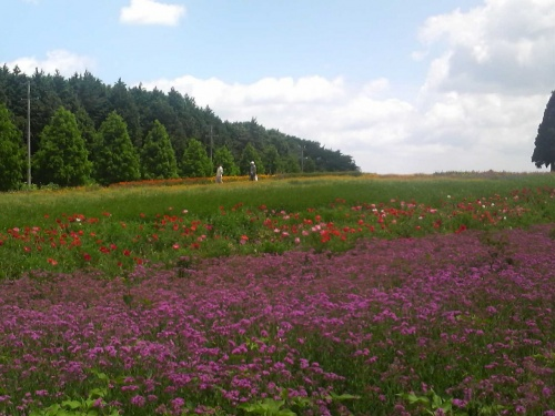 ここは、富良野か!?青山高原の丘陵にゆったりと広がるハーブ園。