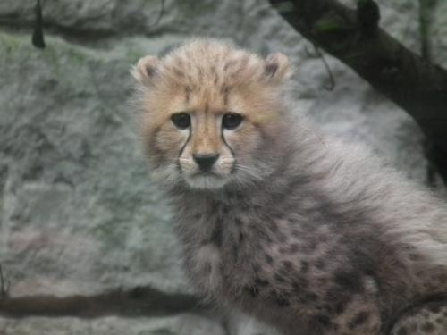 2011年ぐるっとパス その4 多摩動物公園