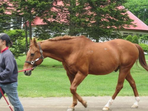 馬と大地と癒しのガーデン≪初夏のノーザンホースパーク≫**【お馬さん達】編