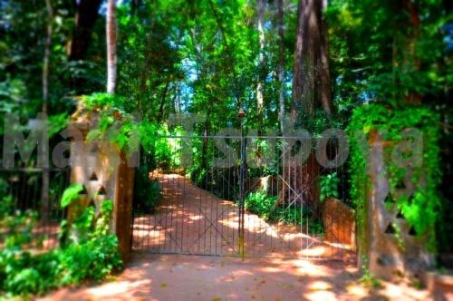 スリランカが生んだ天才建築家である「Bawa」が作った庭である「ヌルガンガ」。<br /><br /><br />ベントタにひっそりと立つこの広大な庭は、手付かずでほとんど日本からの観光ツアー等も無いような所ですが、行ってきてみました♪<br />こちらでレポです。<br /><br />写真)ヌルガンガのまるで夢のような入り口です・・・<br /><br /><br />http://www.lunuganga.com/