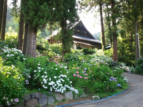小室山妙法寺のあじさい