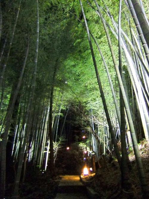 2011.7.7〜7.15の九州旅行。<br /><br />この日から2日間は旅のメイン『竹ふえ』に連泊です!<br />4000坪の竹林に囲まれたお宿はまるで別世界。<br /><br />まずはお宿『竹ふえ』の敷地内、そして貸切風呂をご紹介します。<br /><br /><br />http://takefue.com/index.html