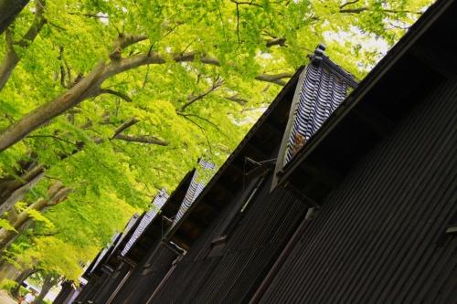 東北日本海沿岸・2011夏(その1/5)★北前船の寄港地・庄内酒田のまちめぐり