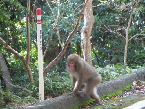 屋久島20110829
