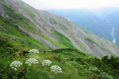 高山植物咲く夏の白馬へ【1】~雷に追われた八方尾根~