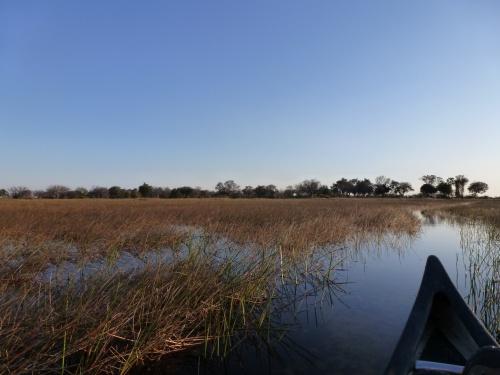オカバンゴ・デルタの画像 p1_28