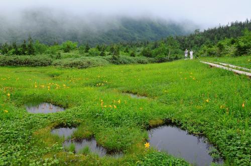 高山植物咲く夏の白馬へ【2】~高山の花咲き競う栂池自然園~