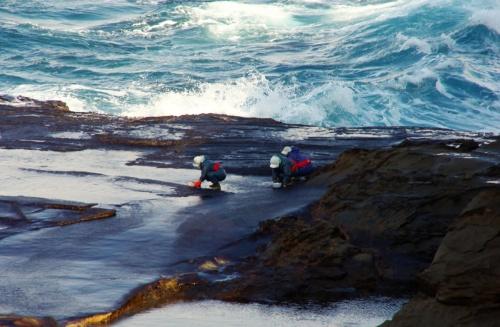 旧暦10月。全国のヤオロズの神々がこの出雲の地にお集まりになる頃、日本海に突き出す十六島鼻と呼ばれる岬周辺の磯に海苔の胞子が付着する。それから1ヶ月ほど経ち育ったものを、寒風吹きすさぶ師走になってから摘み採る。これこそ知る人ぞ知る「十六島海苔(うっぷるいのり)」である。<br /><br />出雲国風土記には当地の名産品として「十六島紫菜(のり)」が記載され。江戸時代の文書には、出雲大社の教えを全国各地へ広めていた「御師(おし)」が冬から春にかけ、信徒の家などを訪れる際に縁起物として十六島海苔をお札と一緒に配布していた事が記されてもいる。<br /><br />謂わば「十六島海苔」は神々の贈り物であり、現在でも日本最古のブランド品として、季節と生産地・生産者が限定される希少品である。<br /><br /><br />クリスマス寒波が去った後の僅かな晴れ間がのぞく朝、かねてより1回は見ておきたかった、摘み取りの様子を見るため、旧平田市十六島に向かった。<br /><br /><br />アクセス:一畑電鉄雲州平田駅から車で15分(車でないと無理)