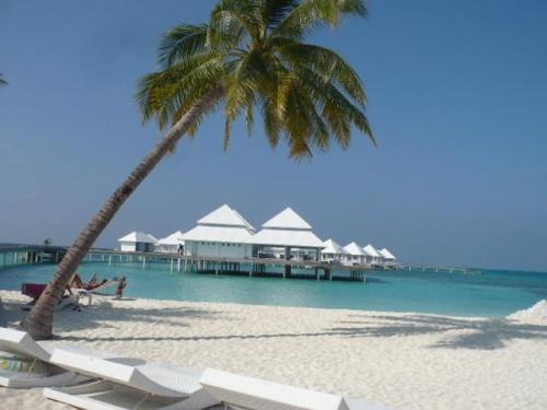 Thudufushi Island Resort(トゥドゥフシ アイランド リゾート)<br />(2012年1月18日現在の情報です。情報は予告なしに変更されますので、予めご了承ください。)<br /><br />『わ〜妖精のお部屋みたいな真っ白な水上コテージと真っ白なビーチ…ドキドキしちゃう』<br />2010年12月に改装工事を終え、水上コテージが誕生!<br />South Ali Atoll西側に位置し、空港から水上飛行機で約30分。<br />トゥドゥフシとアトゥルガは姉妹リゾート。トゥドゥフシからアトゥルガまでスピードボートで約30分と近い。<br />丸くて小さくてこぢんまりとした島は1周歩いても約10分。<br />水上飛行機から、このリゾートを見る方は、え〜何処のリゾート〜?と、必ず聞くくらい島&水上コテージが魅了的!<br />水上飛行機はMaldivian Air Taxi。赤い水上飛行機は模型みたいで可愛い。<br />水上飛行機チェックイン後、国際線ターミナルから空港東側にある水上飛行機のターミナルまではバスで移動します。<br />ターミナル到着後正面にカスタマーカウンターがありますので、カウンタースタッフに搭乗券を見せて、水上飛行機のフライトナンバー&出発時間の再確認をされてください。<br />水上飛行機出発のお時間まで、広いターミナル内で快適にお待ちいただけます。<br />オープンエアーで気持ちが良く、水上飛行機が目の前に見えます。<br />搭乗時間になりましたら、フライトナンバー&リゾート&搭乗ゲートの案内が放送されますので、搭乗ゲートへお進みください。また、モニターにも表示されますので、ご確認ください。<br />もし予定の出発時間になっても搭乗案内が無い場合は、カスタマーカウンターにお問い合わせください。<br /><br />トゥドゥフシのプラットホームからリゾートまで、ドーニーで約5分です。<br />リゾートスタッフがお迎えいたします。<br />リゾート到着時は、フレッシュジュースのウエルカムドリンクとフルーツ!<br />モルディブに来た!と言う実感がわきますよ〜...。<br /><br />ビーチバンガローご宿泊のお客様は、真っ白なビーチが広がる島のレセプションでチェックイン。<br />水上コテージご宿泊のお客様は、真っ白いレセプションでチェックイン。<br /><br />オールインクルーディブなので、気軽に過ごせるのも大きな魅力!!!<br /><br />島の雰囲気<br />モルディブを感じる島内は、ソフトな白いビーチが綺麗で波の撃つ音が優しく心に響きます。そして静か...。<br />スタイルの良いヤシの木が豊富で、ビーチにもス〜ット伸びています。お部屋の近辺にあるヤシの木は、自然の木葉のパラソルを形とり、日陰となり気持ちよく過ごせます。<br />島内も緑が綺麗で日陰も有り歩きやすい。<br />自然を上手に残し、島つくりをしています。<br /><br />ソフトな白砂のビーチ沿い歩くと、波際がキラキラしているのでとても綺麗です。<br />乾季&雨季の風向きで、ビーチの広がり方が変化しますが、両時期共に綺麗なビーチが広がっています。北西方向には、綺麗な砂州伸びています。<br />メインの桟橋&ラグーン内には小魚の群が沢山!多いなお魚に食べられないように集団で移動しますので、常に形も変わり面白い。<br /><br />お部屋番号30番付近では気持が元気になれるサンライズ...ビーチバー前からは心が癒されるサンセットを眺めることができます。<br />ビーチバーの前には、大きな白いサンベッドが有り、ご自由にご利用いただけます。<br />水上レストラン&バーでも、綺麗なサンセットを眺めていただけます。<br /><br />サギの鳥さんもいますよ〜。メインレストラン前にはBBQコーナーがあります。<br />そこにポーズをとり立っています。横を通っても逃げません...<br />とてもフレンドリーです。<br /><br />トゥドゥフシはイタリア人のお客様が半分、後の半分はドイツ、スイス、イギリス、中国、韓国、その他、と多国籍。<br />日本人マーケットには未開発のリゾートです。この点も魅力的ですね!<br />大半のお客様はお部屋のビーチまでのんびりと日焼け&読書を楽しまれています。<br />水上コテージにご宿泊の方は、ひろ〜いテラスでのんびりと…。<br />意外とダイビングをされる方などが多く午前&午後とボートダイブに行かれています。<br />また、アクティビティメニューもあり、気軽に参加されている方も多いです。<br /><br /