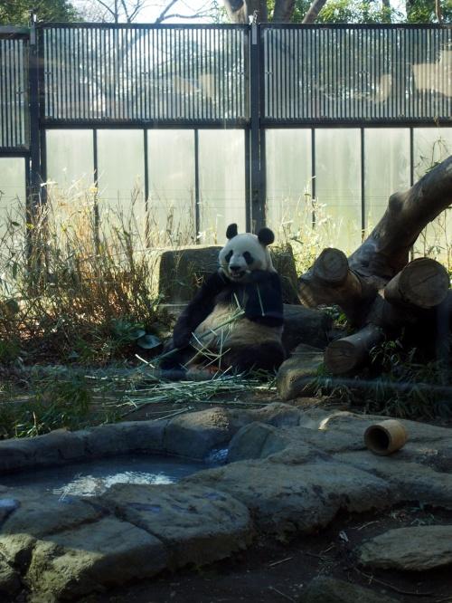 ももへの手紙 《 湯島天神の梅~上野動物園 パンダ♪》
