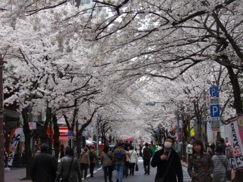 東京の玄関、北口より徒歩2分、八重洲口に近い日本橋の桜通りで花見出来るよー!!満開の桜アーケードで賑やかに桜祭りの人出一杯でした。<br />東京駅で時間のある方、少しだけ足伸ばすのも良いかも。