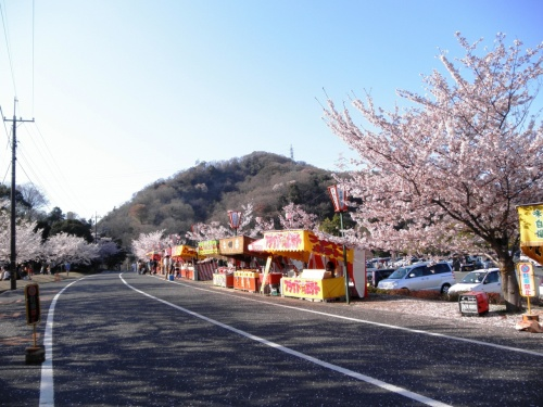深山公園の桜