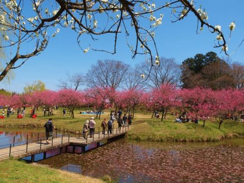 古河総合公園 桃祭り 美しい花たち大歓迎ー上