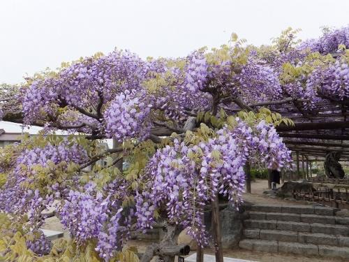 津島神社&天王川公園