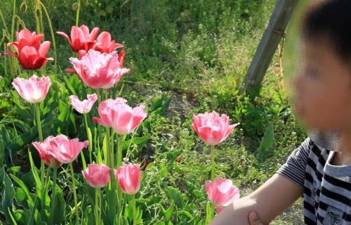わが家の週末 - 100万本の季節の花々が飾る彩りの大地・大阪府堺市「ハーベストの丘」 編-