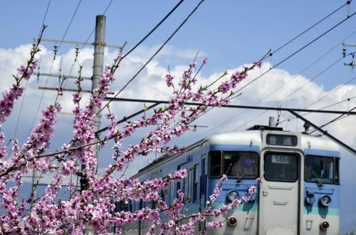 青空と満開な桃の花に誘われて・・・桃色に染まった山梨春日居町に訪れてみた