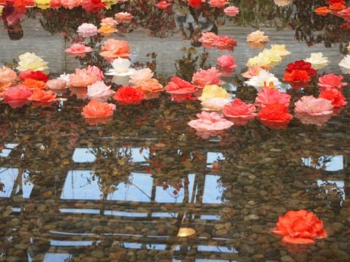 GWは長島温泉に家族旅行☆後編☆ベゴニアガーデンでうっとり(*^。^*)