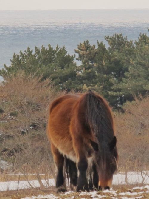 尻屋崎(しりやざき)は、青森県下北郡東通村にある、下北半島の北東端をなす... 尻屋崎(しりやざ