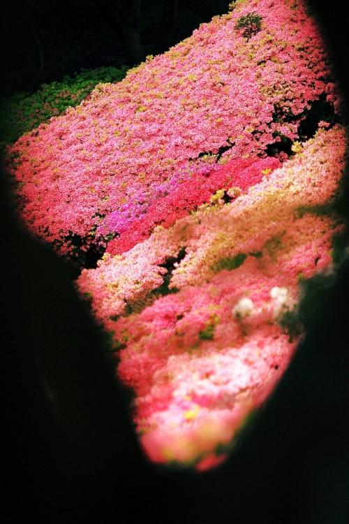 Solitary Journey [1034] GW九州縦断、自由気ままなε=ε=ヘ(;^^)ノ 車旅①<白野江植物園でお花観賞&梵字大石>福岡県北九州市