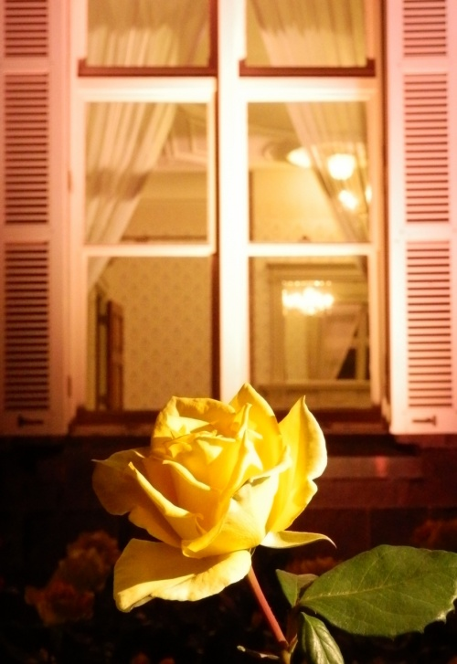 《洋館とバラ》な~んてテーマで、旧古河庭園の薔薇を、ライトアップまでじっくり~!!