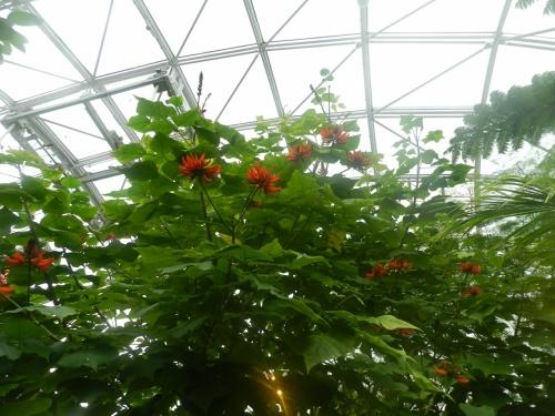 『とっとり花回廊』の東館(ゆりの館)&南館(ジャングルドーム)