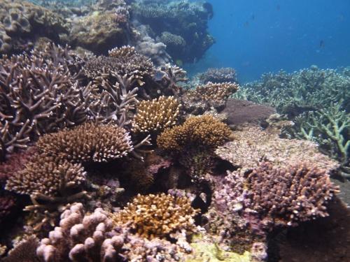 2012年のゴールデンウィークに行ってきましたケアンズ旅行の旅行記、後半です。<br />前半は世界遺産の熱帯雨林キュランダを中心とした山と動物編に続き、今回は世界遺産の海、グレート・バリア・リーフです。<br />ここでは本当に生きている珊瑚を見ることができました。<br />今回は海の中から、遊覧飛行のセスナ機から、最後は日本へ帰国中の旅客機からと様々な角度からGBRを堪能できました。<br />それでは旅行記後半、早速行ってみます。<br />
