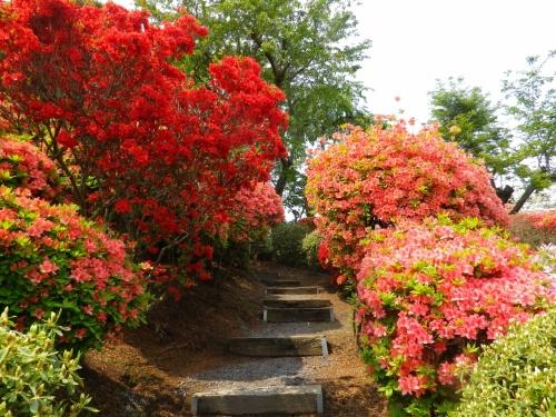 須賀川牡丹園と大桑原つつじ園のお花見