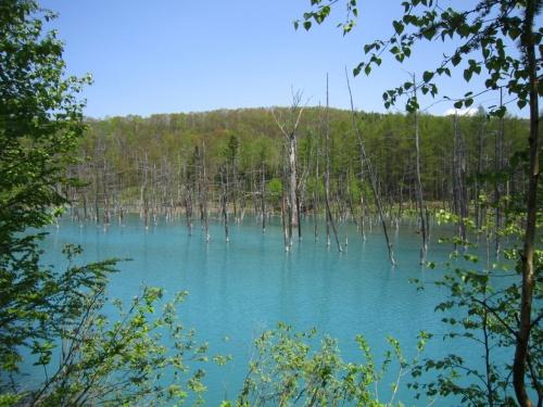 5月の美瑛≪青い池≫**旭岳≪温泉と大雪旭岳源水≫