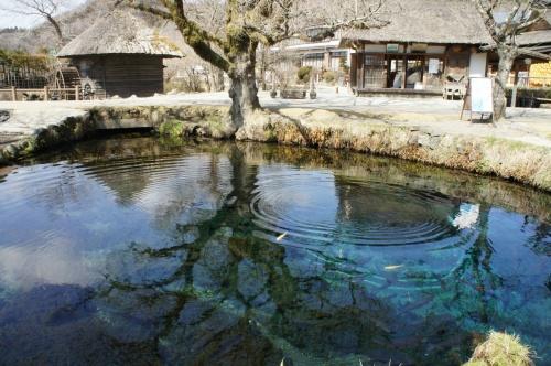 忍野八海を巡る旅 ~湧水の青い色が神秘的でした