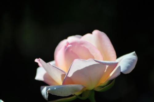 お花見は桜だけではありませぬ☆近場花巡り