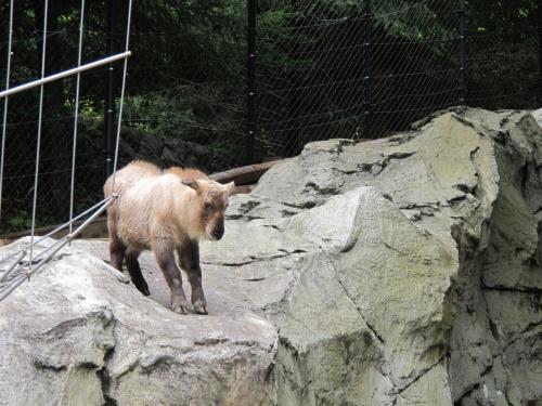 あーー、今日は何も予定がないねぇ。。<br />と、ちびQさんと話していたら「動物園がいいよ!」とのお答え。<br />ほな、ズーラシア行くか!<br />と、思いつきでズーラシアに行ってきました。<br /><br />大急ぎでお弁当を作ってLet's Go!<br />
