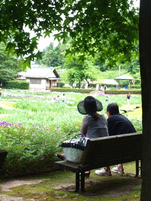 越後平野も菖蒲の季節、あちこちでお祭りが開かれる季節になりました。今回は三条市の「しらさぎ森林公園」(http://www.city.sanjo.niigata.jp/eigyo/page00005.html)の「花菖蒲まつり」(http://www.city.sanjo.niigata.jp/eigyo/page00090.html)と咲花温泉(http://www.sakihana.jp/)に出かけて来ました。<br /> 多少天候に不安がある週末でしたが、北陸道三条燕ICから信濃川を渡り、国道289号線から県道を走り栄地区の公園駐車場に何とかとめる事が出来ました。既に17日から「花菖蒲まつり」が始まってはいたのですが花の開花は五分咲き程度でした。多くの家族連れが菖蒲園の遊歩道を散策していました。私は数年ぶりに訪ねたのですが、ここの雰囲気はなんとなく落ち着き大好きな場所です。(数年前に改築された「しらさぎ荘」http://www.city.sanjo.niigata.jp/chiikikeiei/plant00001.htmlも何回か訪ねています)<br /> 公園散策後三条市で開かれている「三条クラフトフェアin槻の森」(http://www.city.sanjo.niigata.jp/eigyo/page00081.html)を訪ね大いに楽しみました。会場から駐車場に向かう小道で野兎に遭遇、驚きました。<br /> 会場を後に国道289号線から290号線で五泉市を通り咲花温泉に向かい、今回は「柳水園」(http://www.sakihana.jp/stay/ryusuien.html)さんにお世話になりました。