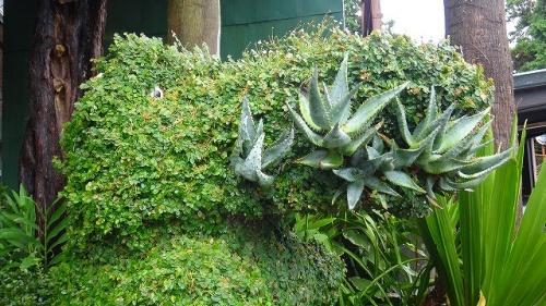 熱川ワニバナナ園(1)・・・最初は分園のバナナ園から