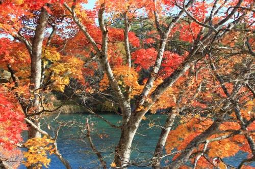 福島県復興への旅行記 ?年間の記録