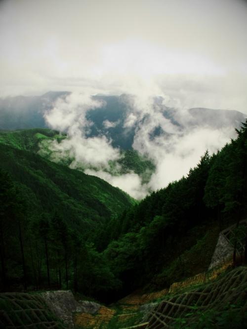 初夏 雨の天竜スーパー林道 散策