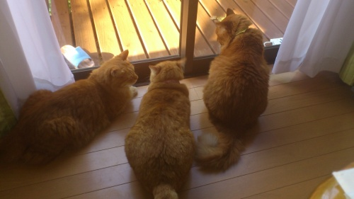 2012年 「ハワイから帰国後・母危篤・慌てて帰った親不孝娘・奇跡が起きるの回復」病院通い&猫の世話