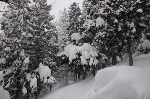 ふと雪が見たくなり~雪国の街越後湯沢へ~