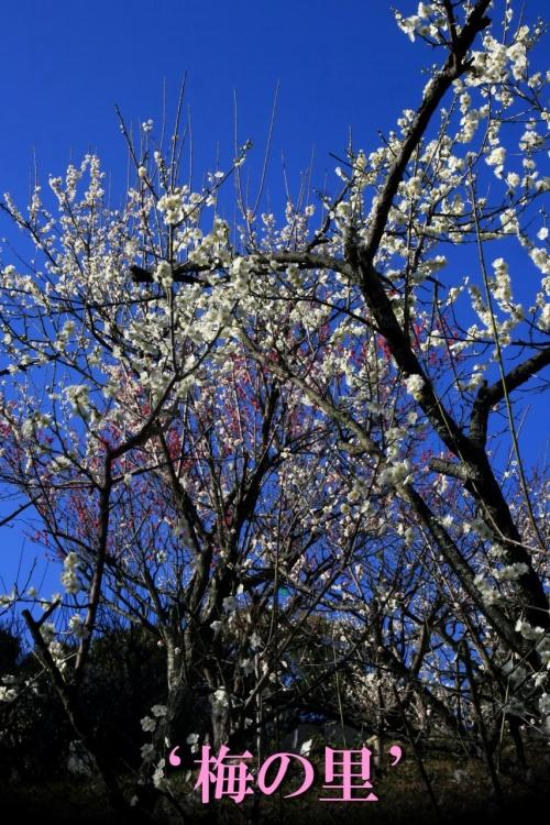Solitary Journey [1161] 春の訪れ♪を感じさせてくれる<冠山公園'梅の里'>&<初代内閣総理大臣・伊藤博文公記念公園>山口県光市