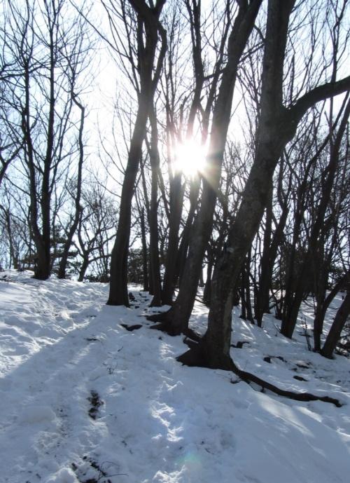 箱根の丸岳でアイゼンの練習をしたばかりだが、1回だけでは不充分…ということで、トレーニング第2弾は丹沢。<br />とはいえ、丹沢でこの時期、我々のような雪道初心者が安心して行けるような場所は非常に限定されてしまう。<br />選んだのは仏果山。<br />無雪期であれば、ファミリーハイキングのフィールドとして使われるような低山。<br />それでも景色はそこそこ、コースの取り方次第で2〜3の山を一度に周遊できるという、バラエティに富んだ場所でもある。<br />また、ヤマビル出没でも定評がある(?)らしい。<br />ならばなおさら今の時期しかないだろう、というわけで、経ヶ岳〜仏果山〜高取山というコースを想定し、時間が厳しくなったら最後の高取山はスキップするという計画を立てた。<br /><br />※ヤマビルの出没期は3月〜11月