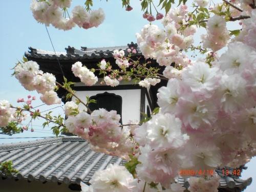 奈良 新家長福寺