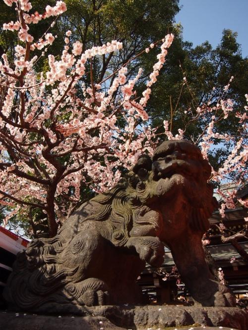 春爛漫♪湯島天満宮梅祭り・旧岩崎邸庭園・アメ横